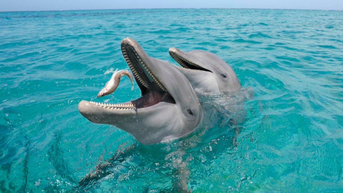Foto de un delfin naciendo 8