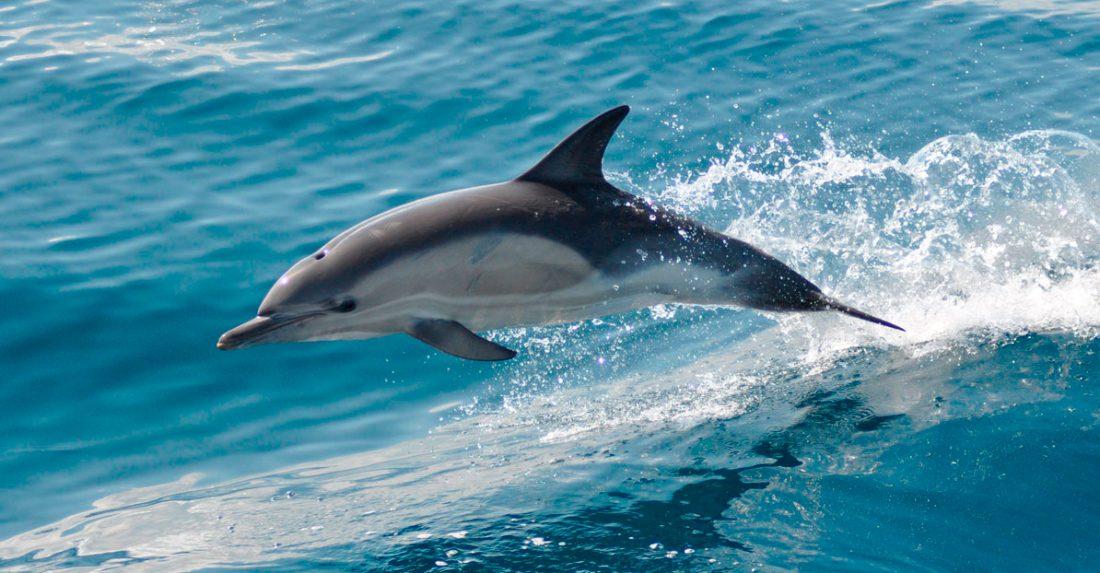Características de los delfines :: Imágenes y fotos