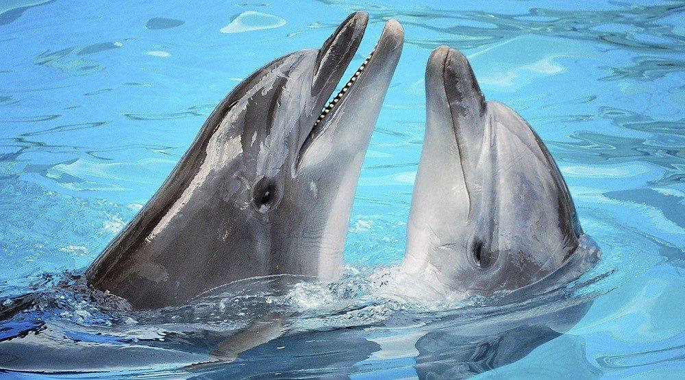 Delfines De Agua Dulce :: Imágenes Y Fotos