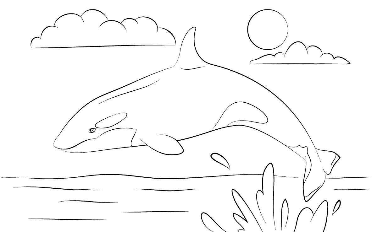 Dibujos Infantiles De Orcas Para Colorear