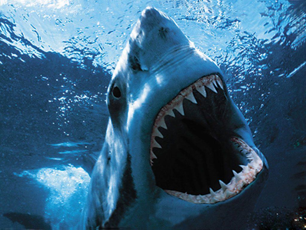 Dientes del tiburón :: Imágenes y fotos