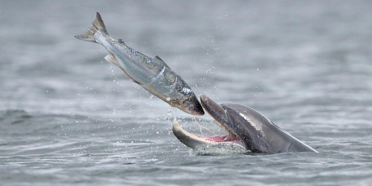 Métodos de caza de los delfines
